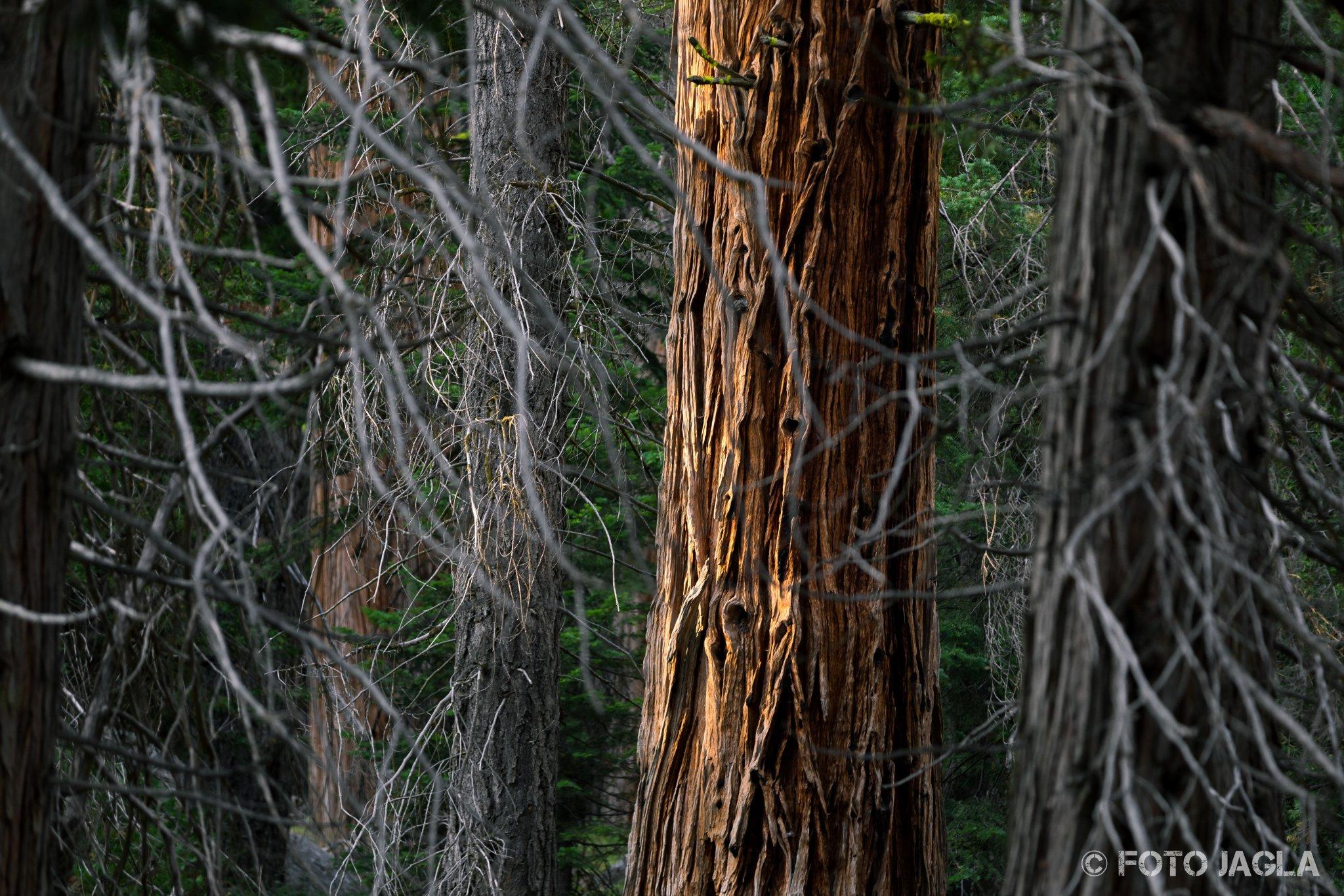 Kalifornien - September 2018 Wanderung entlang des Marble Fork Kaweah Rivers Sequoia National Park - Lodgepole Campground