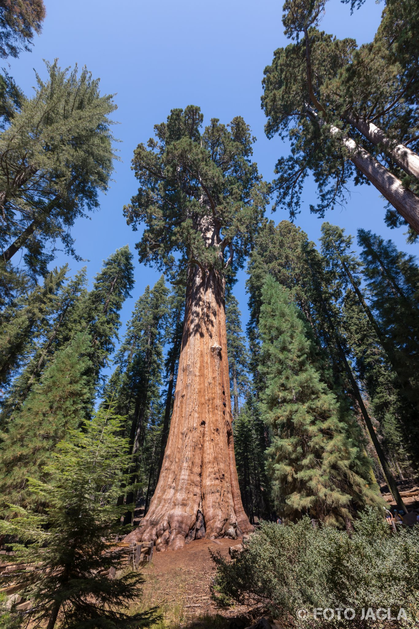 Kalifornien - September 2018 General Sherman Tree - Der voluminöseste lebende Baum der Erde Sequoia National Park - Tulare Country