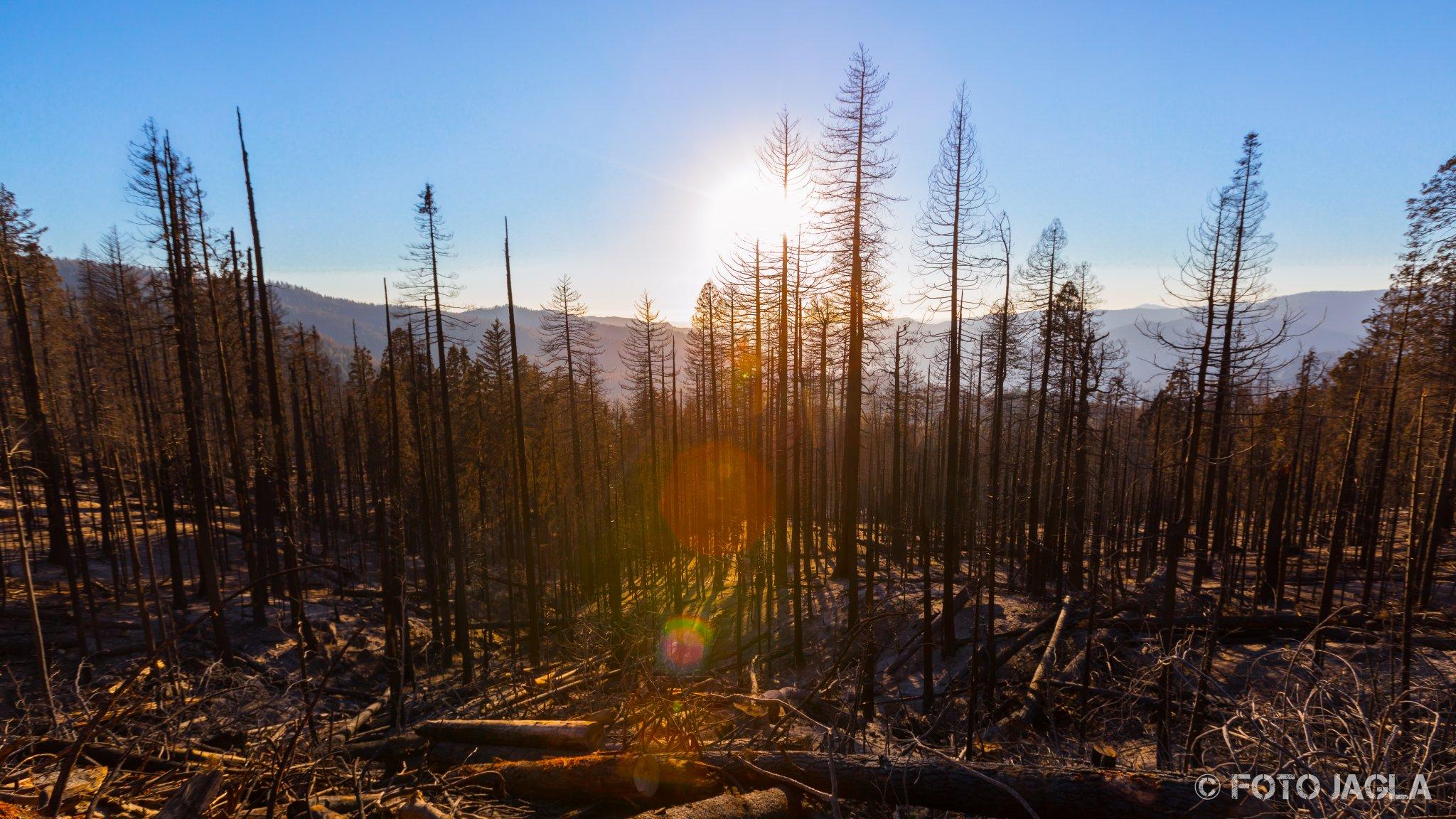 Kalifornien - September 2018 Verbrannter Wald an der Wawona Road Yosemite National Park - Wawona