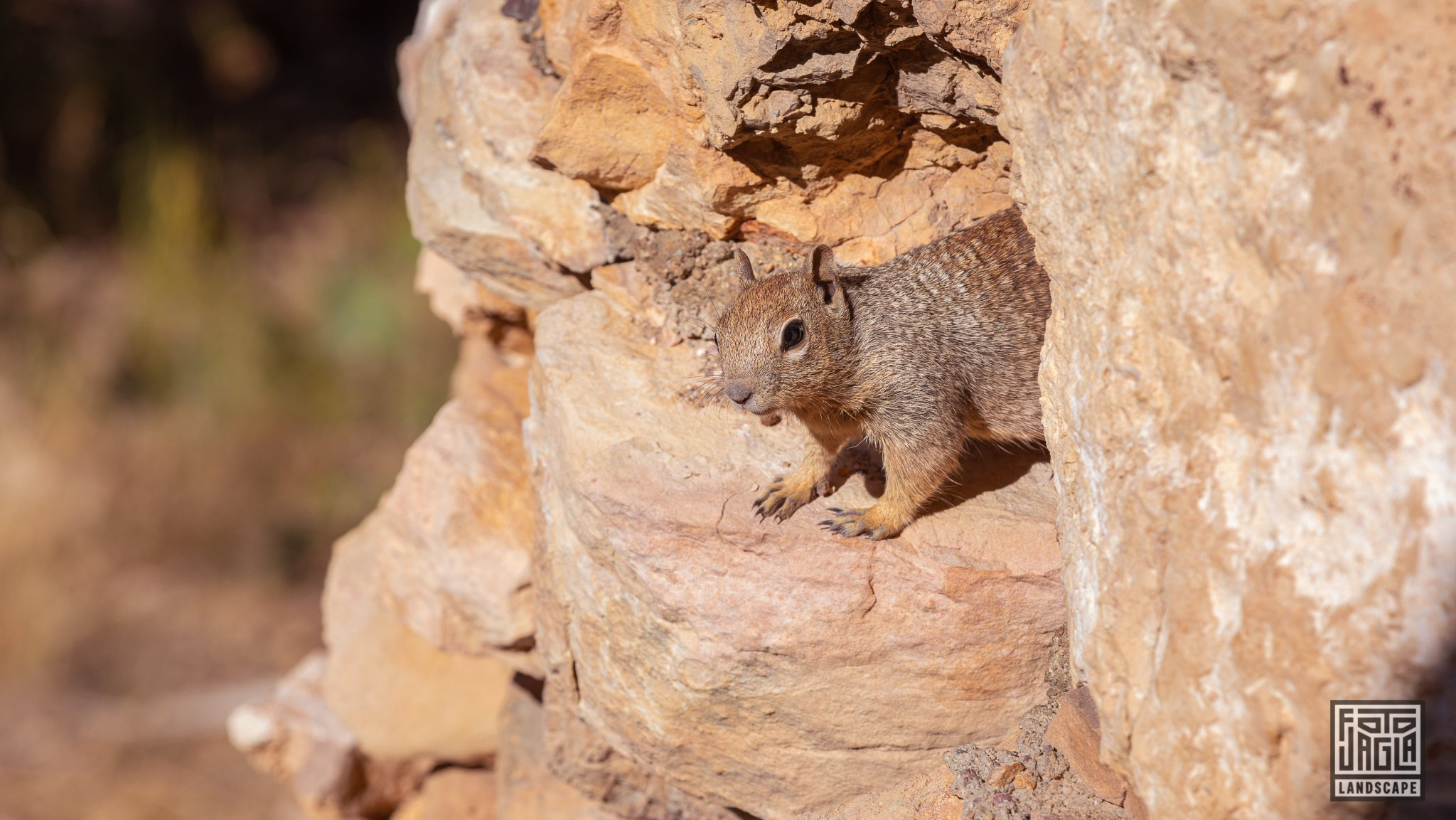 Cute squirrel at Hermit's Rest Viewpoint in Grand Canyon Village