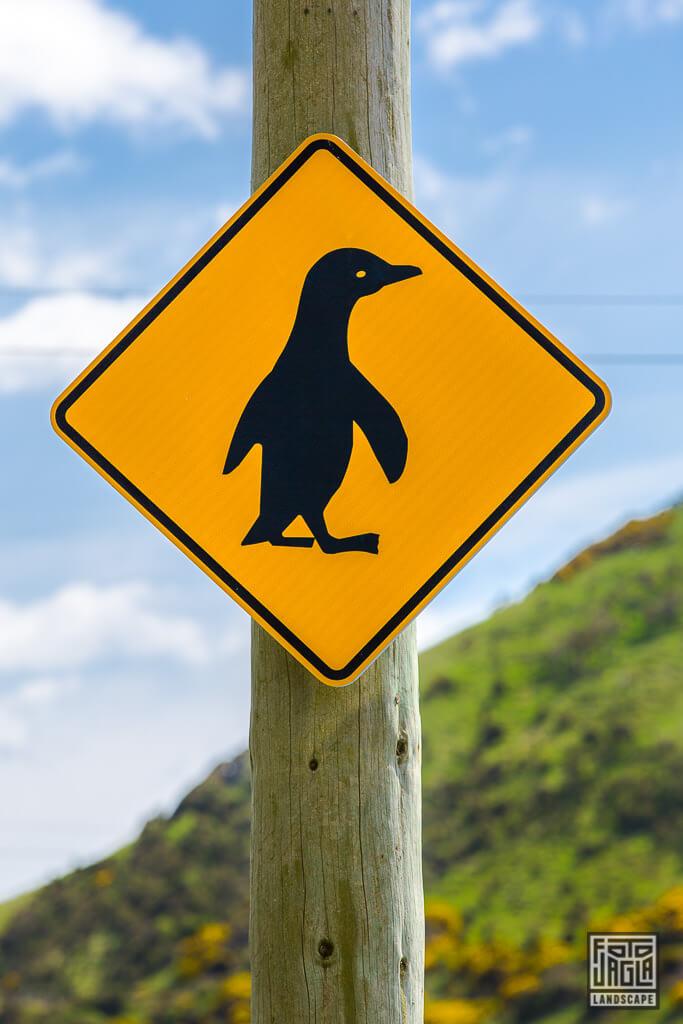Vorsicht Pinguine - Straßenschild am Penguin Place in Dunedin Neuseeland