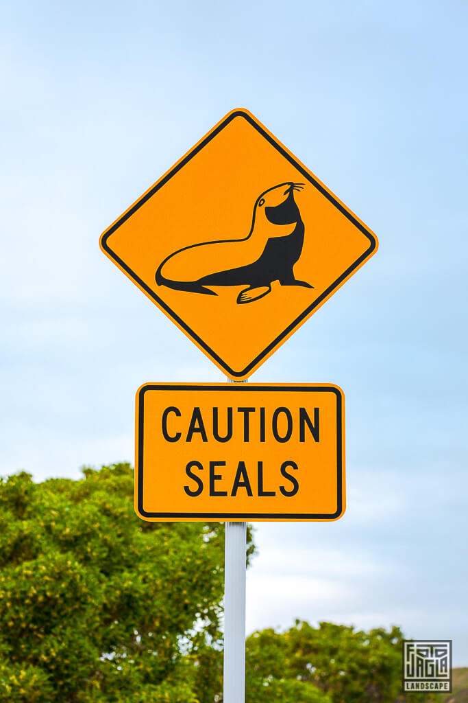 Kaikoura Penguin Walkway - Caution Seals Streetsign - Vorsicht Seehunde Schild in Neuseeland