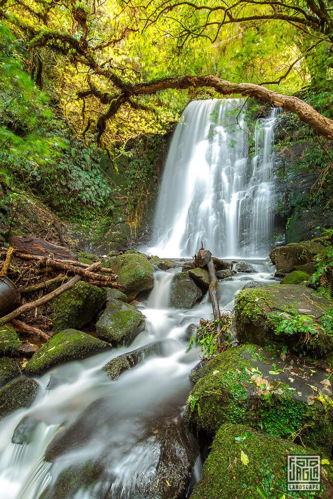 Matai Falls Wasserfall im Catlins Forest Park in Neuseeland