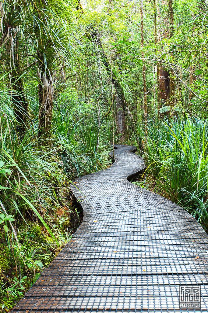 Traumhafter Pfad durch den Waipoua Forest zu den Kauri Bäumen