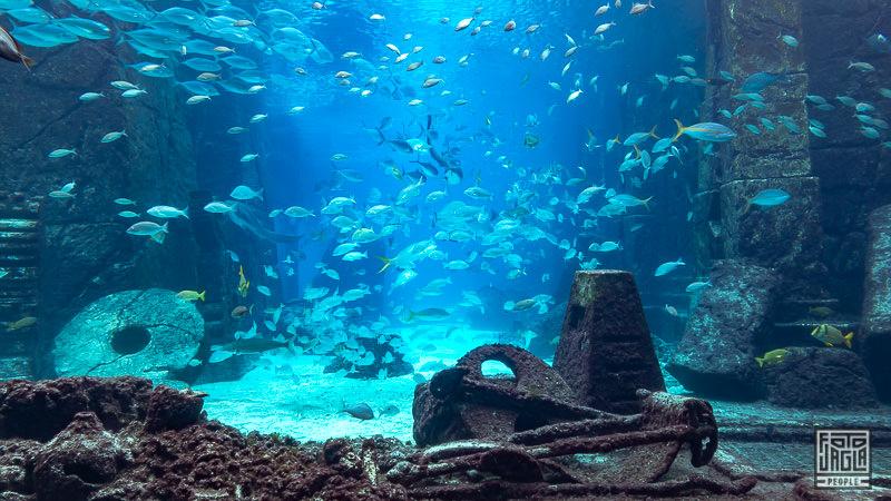 Aquarium im Atlantis Paradise Island Hotel Resort - Bahamas