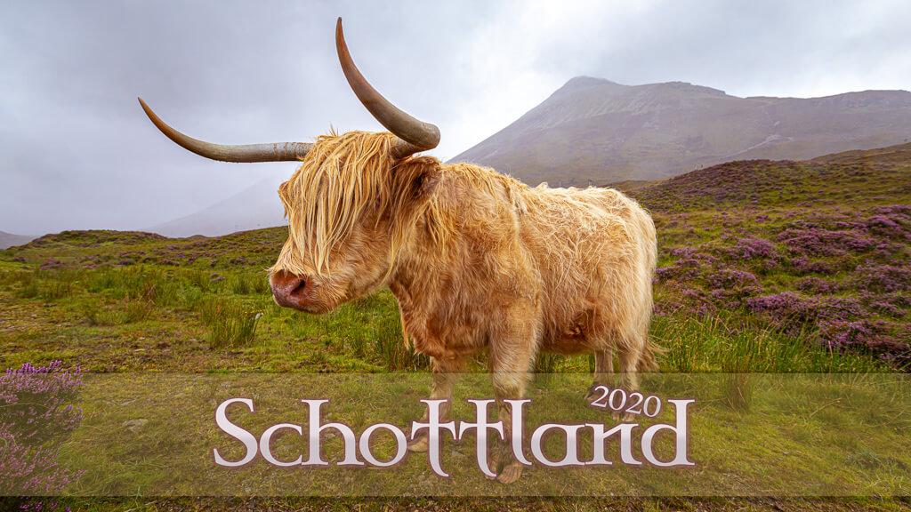 Schottisches Hochlandrind auf der Isle of Skye in Schottland